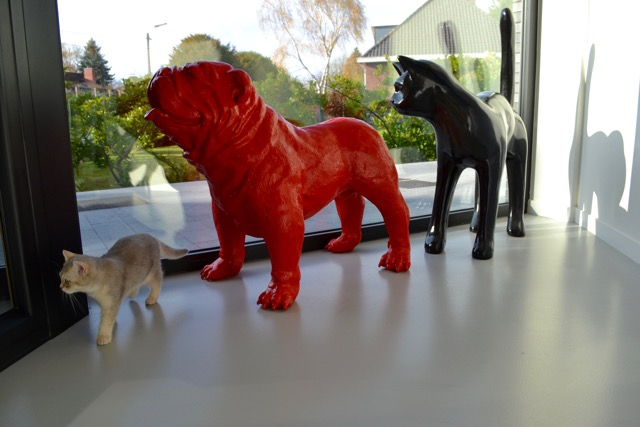 Dierenartsenpraktijk Animalis - Contact