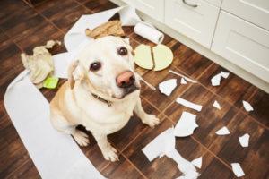 DAP-Animalis gedragstherapie